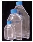 LabServTM细胞培养瓶